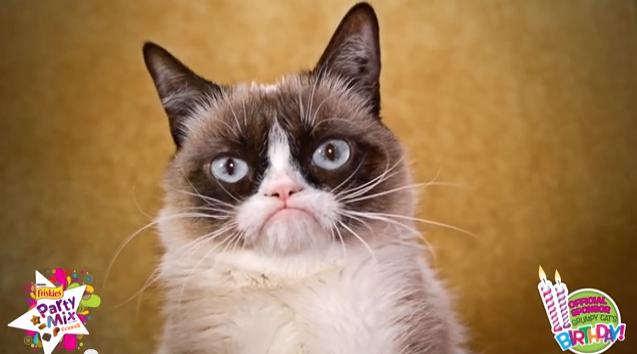 De Grumpy Cat à Henri le chat noir, les succès du Catvertising